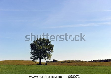 summer landscape. deciduous tree on a green field