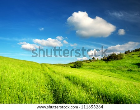 Summer landscape. Green field and clouds