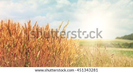 summer landscape. Idea concept harvest. majestic rural landscape with blue sunny sky with sun. Copy space installation of sunlight on the horizon. creative image #451343281