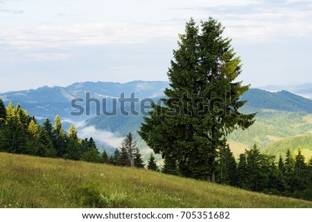 Summer landscape in Apuseni Mountains-Romania #705351682