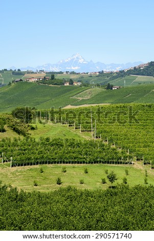 Summer landscape in Langhe (Piedmont, Italy), with vineyards #290571740