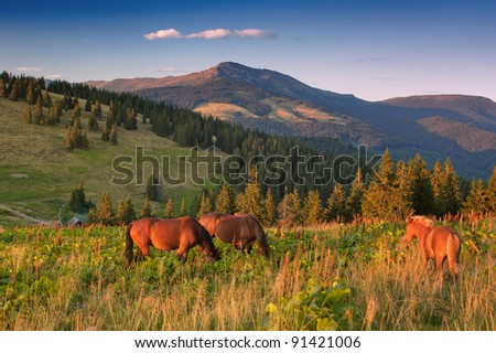 Summer landscape in mountains with herd of horses. Ukraine, mountains Carpathians