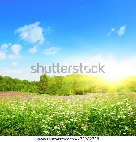 Summer landscape in sunny light.