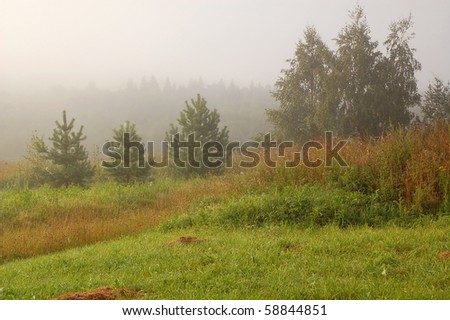 Summer landscape in the country on a foggy day