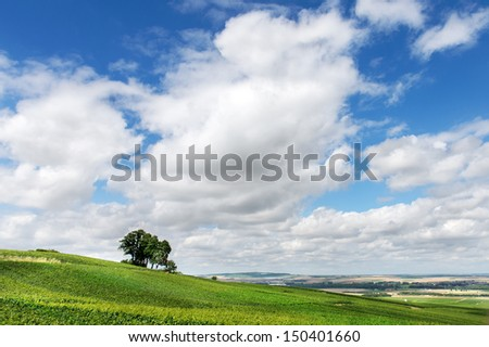 Summer landscape, Montagne de Reims, France