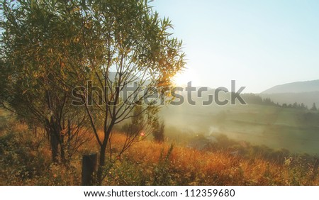 summer landscape - morning