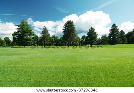 summer landscape of grass and...