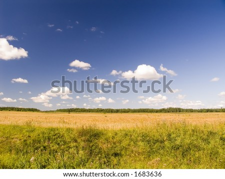 summer landscape of the compressed field