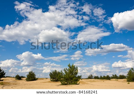 summer landscape on sands with small pines