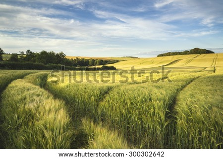 Summer landscape over agricultural farm fields of crops