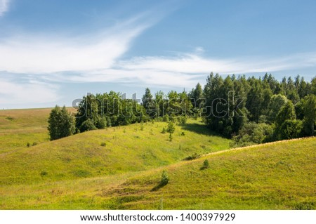 Summer landscape, ravine, grass sedge, mixed grass. Trees of pine and birch willow