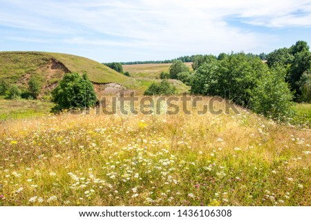 Summer landscape, ravine, grass sedge, mixed grass. Trees of pine and birch willow #1436106308