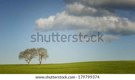 summer landscape, two trees and birds