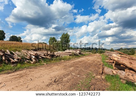 Summer landscape with a country road and felled trees
