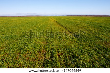 Summer landscape with a field of grass and blue sky #147044549