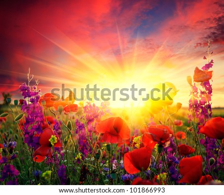 Summer landscape with a field of red poppies blooming