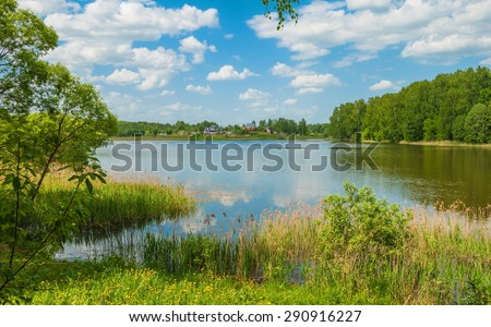 Summer landscape with a lake and dandelions