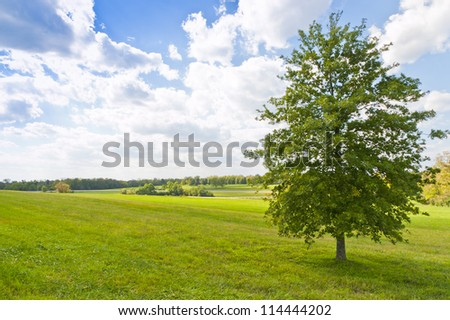 Summer landscape with a tree