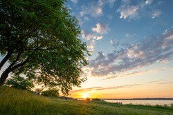summer landscape with a tree and grass near the water on a background of sunset and clouds