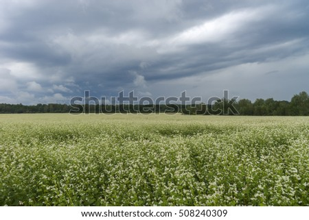 Summer landscape with agricultural field and white clouds on the blue sky. Field, field, field, field, field, field, landscape, landscape, landscap, landscap, landscap, landscap, landscap, landscap #508240309