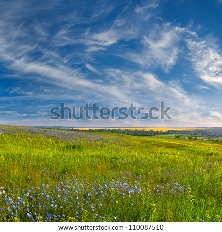 Summer Landscape With Blue Flower Meadow And Beautiful Clouds In The
