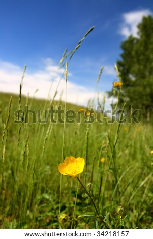 summer landscape with buttercup under hill