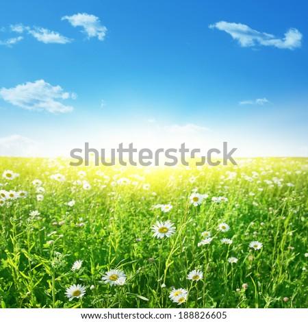 Summer landscape with daisy field, blue sky and sun. - Shutterstock ID 188826605