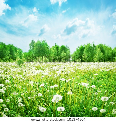 Summer landscape with dandelion field and blue sky.