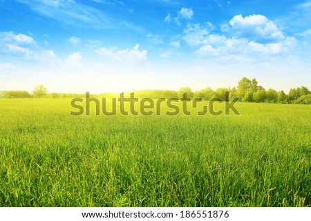 Summer landscape with field of grass,blue sky and sun. - stock photo