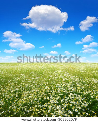 Summer landscape with field of marguerites