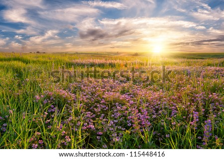 Summer landscape with flower meadow and majestic clouds in the sky on sunrise