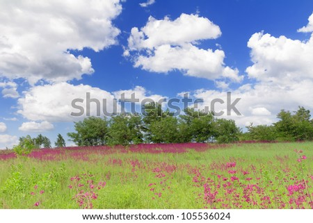 Summer landscape with flowering meadow, clouds and blue sky in Bucha, Ukraine