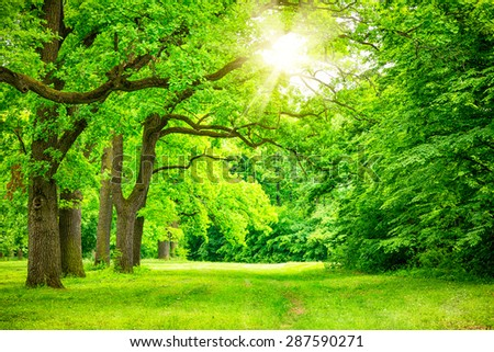 summer landscape with forest trees #287590271