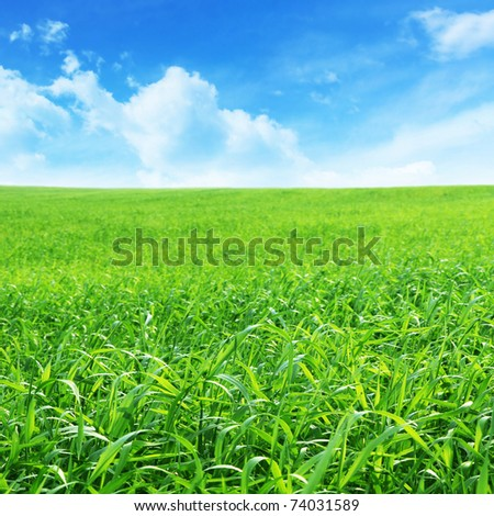 Summer landscape with green field and blue sky.