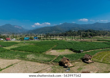 Summer landscape with green field, wooden house in a corn field and mountains on a blue sky #563997562