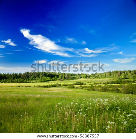 Summer landscape with green forest meadow and blue sky