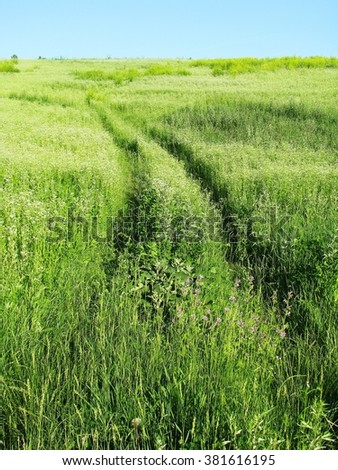 Summer landscape with green grass and road. Sunny day #381616195