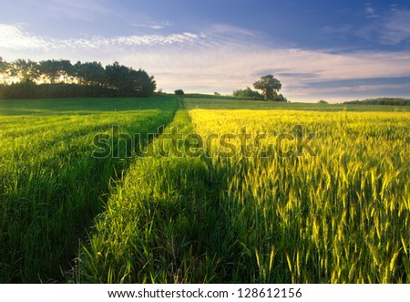 Summer landscape with green grass, corn, tree and clouds