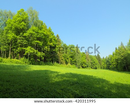 Summer landscape with many green grass, green trees and clear blue sky #420311995