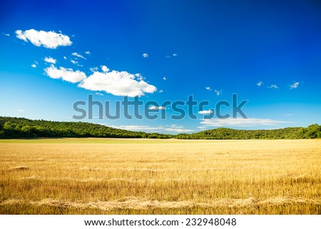 Fields/Agriculture