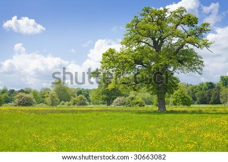 summer landscape with oak tree - Shutterstock ID 30663082