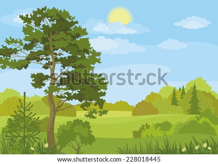 Summer landscape with pine and fir trees, bushes, flowers, grass, sun and blue sky.