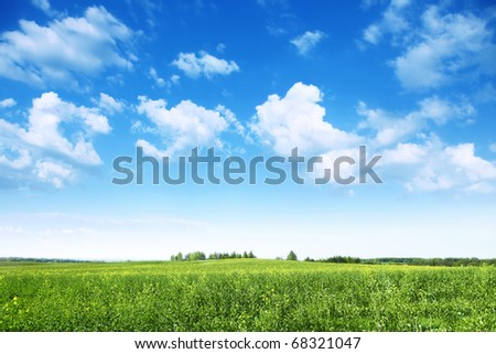 Summer landscape with rapeseed field and blue sky.