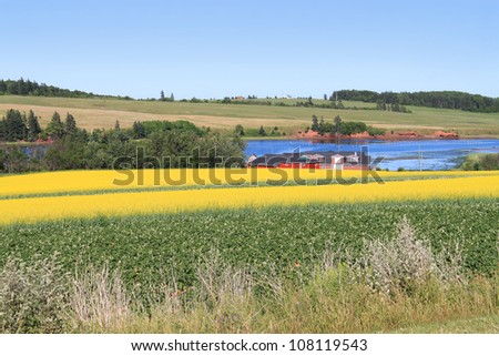 Summer landscape with rapeseed fields and ocean in central Prince Edward Island, Canada
