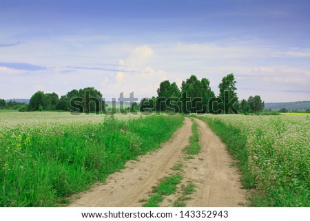 Summer landscape with road