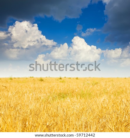 Summer landscape with  rye field and cloudy sky #59712442