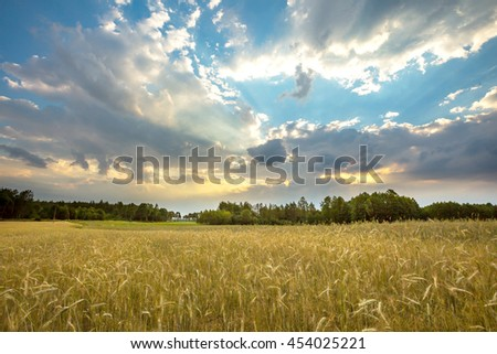 Summer landscape with stormy sky over fields of wheat. Polish landscape #454025221