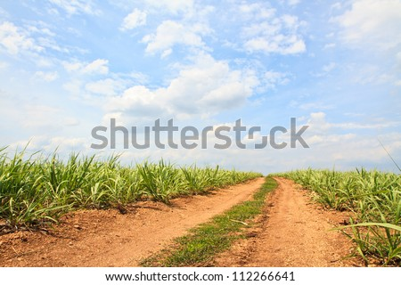 Summer landscape with  sugar cane, road and clouds - stock photo