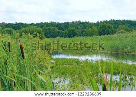 Summer landscape with swamp lake and forest. Nature with forest river and swamp. Country wetland landscape. Swamp water forest trees landscape. Marshland swamp water trees panorama