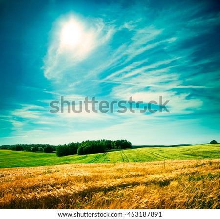 Summer Landscape with Wheat Field and Clouds #463187891